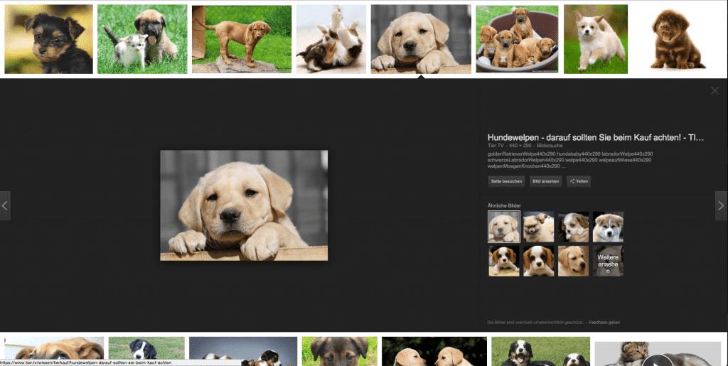 hundewelpen foto 1